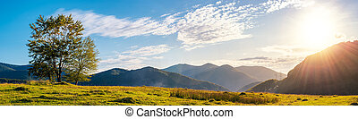 trees on the grassy meadow - panorama of a mountainous...