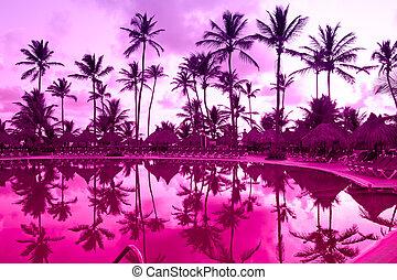 Panorama of a palm beach under sunset sky