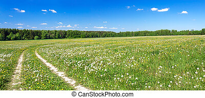 panorama of a summer landscape with the field