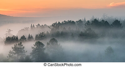 panorama of an attractive foggy morning in the forest. view from height