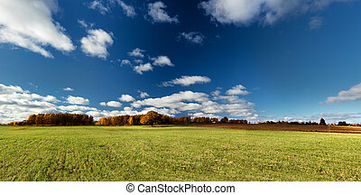 Panorama of autumn forest at the horizon with beautiful mighty oak tree at green field against the blue sky