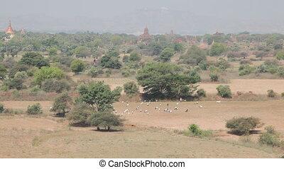 Panorama of Bagan - Bagan, Myanmar