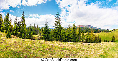 panorama of beautiful countryside in mountains
