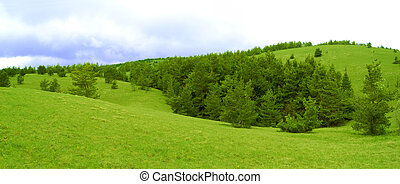 Panorama of Beautiful Hilly Landscape with Wide Meadow and Fir Forest