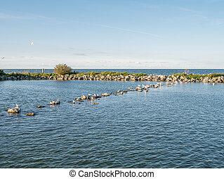 Panorama of breakwaters and birds on artificial island De Kreupel in lake IJsselmeer, Netherlands