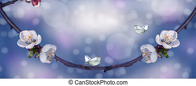 panorama of cherry flowers on a branch, close-up, spring background with butterflies