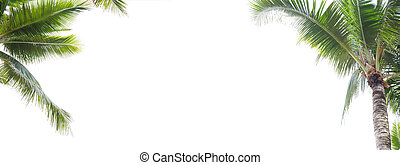 Panorama of coconut leaf frame isolate on white background whit copy space, Summer concept.