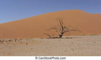panorama of Dune 45 in sossusvlei Namibia, Africa wilderness...