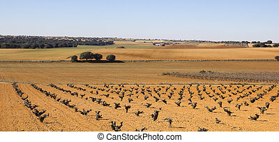 Panorama of fields with vineyards in Castilla la Mancha, ...