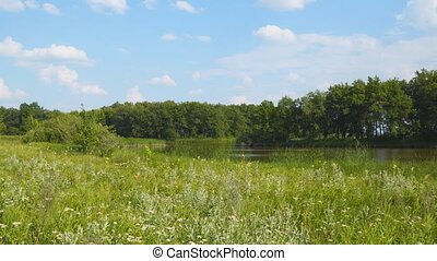 Panorama of forest landscape. Meadow, lake and forest