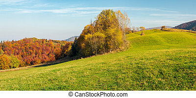 panorama of forest on grassy hill in autumn. beautiful rural...