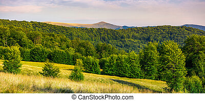 panorama of Forested Carpathian mountains. beech forest on...