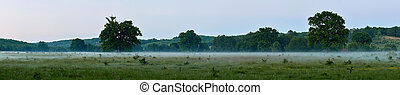 Panorama of forests in the mist