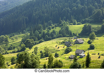 Panorama of fresh green hills in Carpathian mountains in spring sunny day