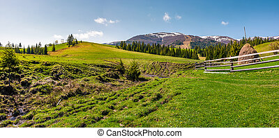 panorama of grassy meadow of rural area. gorgeous springtime...