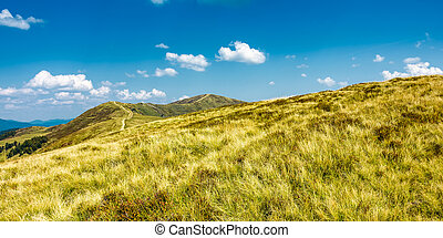 panorama of grassy mountain ridge. beautiful summer scenery...