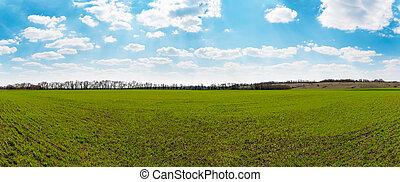 Panorama of green field