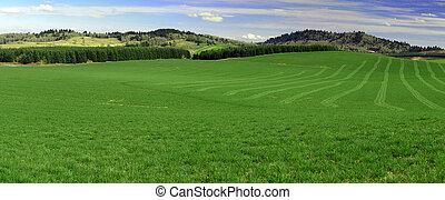 Panorama of green hills
