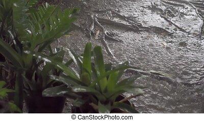 Panorama of green jungle during tropical rain. Green jungle...