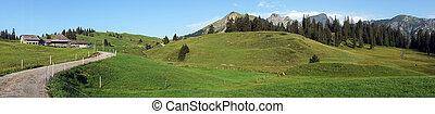 Panorama of green pasture