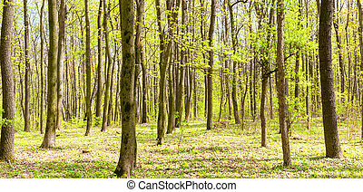 Panorama of green spring forest