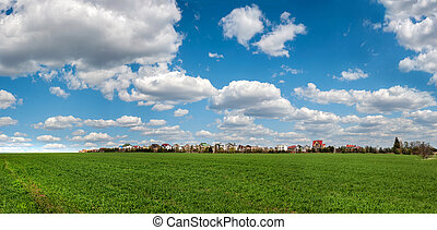 panorama of green wheat young shoots in spring, village with beautiful sky clouds