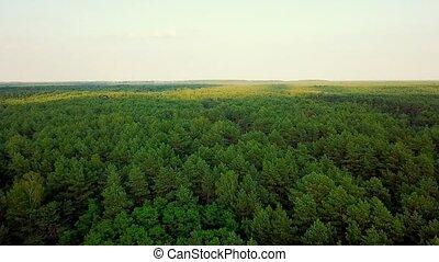 Panorama of green woods