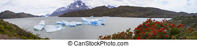 Panorama of Grey Glacier on Grey Lake with blooming fire bushes.jpg
