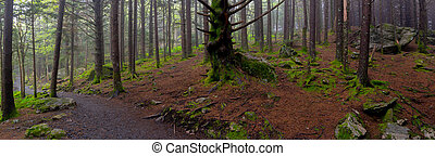 Panorama of Mossy Forest Floor