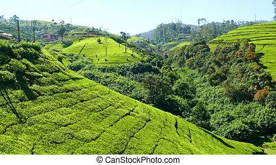 panorama of mountain tea plantation in Sri Lanka