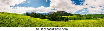 panorama of mountainous landscape in springtime. spruce...