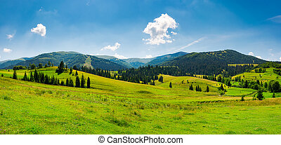panorama of mountainous landscape in summer. spruce forest...
