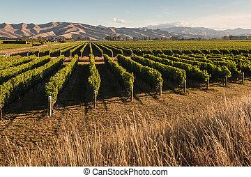 panorama of New Zealand vineyards