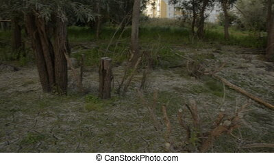 Panorama of overgrown forests by the river
