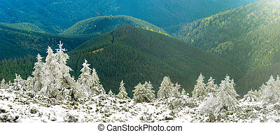 Panorama of pine trees in snow mountains
