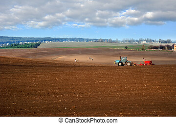 Panorama of plowed field, arable land lines, tractor with seeder, storks on the field. Agricultural tillage, land preparation for sowing.