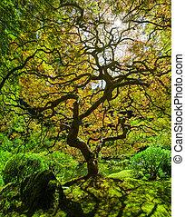 Panorama of Portland Japanese Maple Tree in Oregon