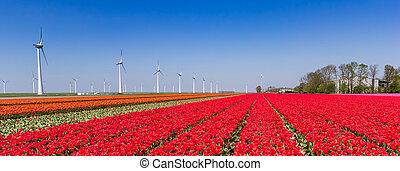 Panorama of red tulip fields and wind turbines in Noordoostpolder, Holland