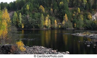 Panorama of river in wild forest