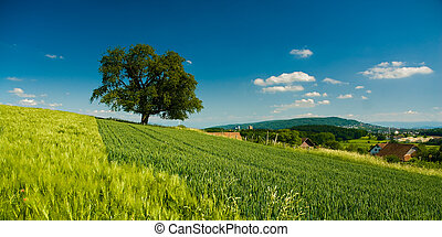 panorama of rural scenery with tree on field