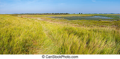 Panorama of salt marsh and tidal flat at low tide of Waddensea on West Frisian island Schiermonnikoog, Netherlands