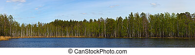 Panorama of small wood lake
