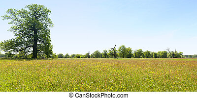panorama of spring meadow