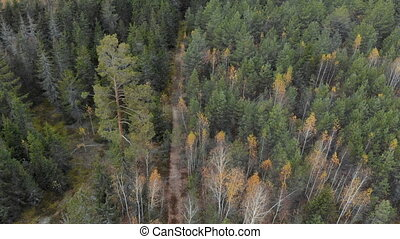 Panorama of spruce and pine forests, aerial view - Panorama...