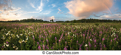 panorama of summer meadow with rainbow