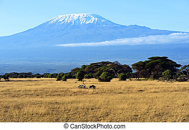 Panorama of the African savannah - Mount Kilimanjaro in the ...