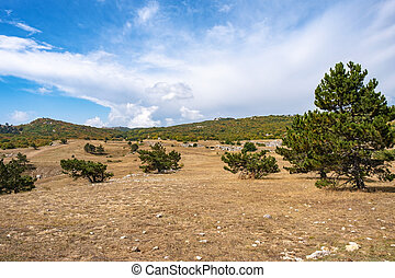 Panorama of the Ai-Petri plateau with low pines on a cloudy sunny day.