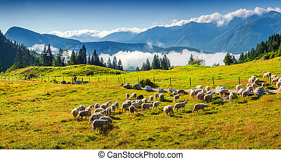 Panorama of the alpine pastures in the Slovenian. Julian ...