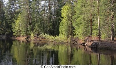 Panorama of the banks of the taiga river in the summer at evening