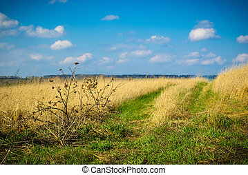 panorama of the countryside in the spring